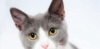 Najlepsza sucha karma dla kota