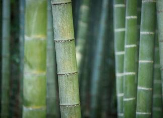 Na czym polega fenomen ręczników bambusowych